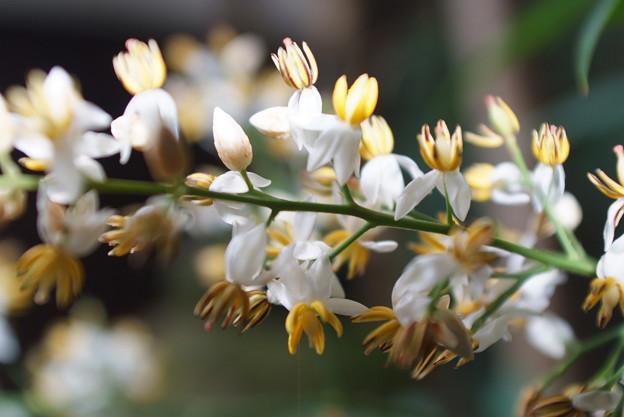 写真: 南天の花