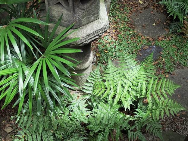 写真: 梅雨期の坪庭
