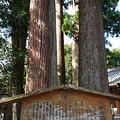 写真: 川柳浅間神社(2)