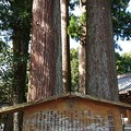 Photos: 川柳浅間神社(2)
