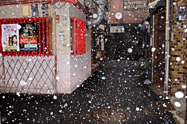 写真: ボタン雪が舞う