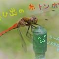 Photos: 郷愁の赤とんぼ