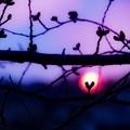 写真: ハートな夕陽