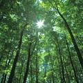 新緑の美人林(4)