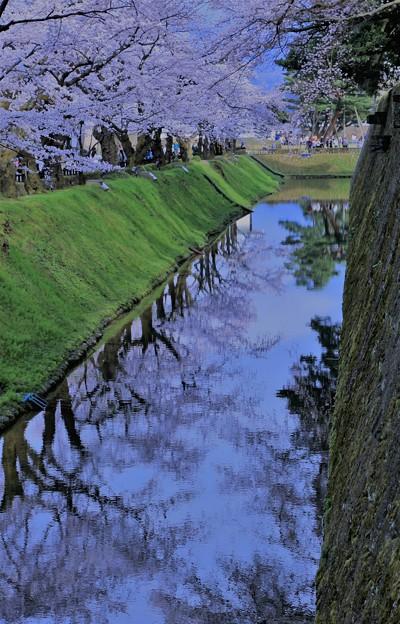 金沢城 お堀と桜