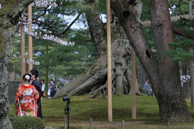 根上松 花嫁さん 桜の下で