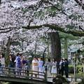 花見橋 満開の桜の下で