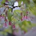 雨のシャンデリア