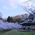 写真: 四百年の森(2)