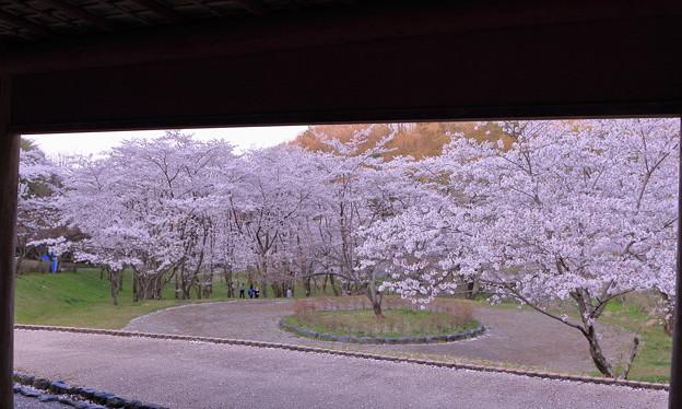 写真: 四百年の森(3)