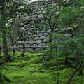 新緑の兼六園 栄螺山(さざえやま)