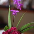 紫蘭とヤグルマギク