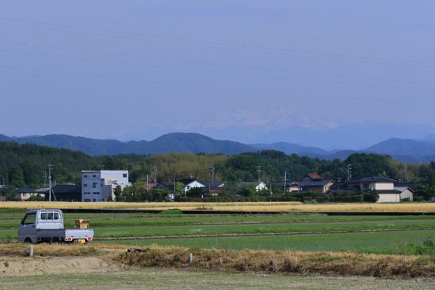 白山と田植えの終わった水田