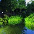 Photos: 兼六園 曲水とカキツバタ