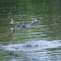 Photos: ツバメ ゜〇○〇゜○゜。