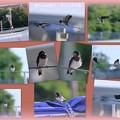 Photos: 船のお家で 巣立った子ツバメちゃん(1)