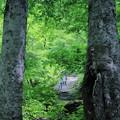 写真: 緑の中を行く 白山白川郷ホワイトロード