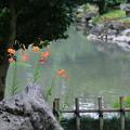 Photos: 兼六園 瓢池 オニユリ