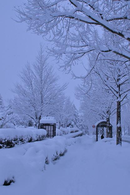雪のバス停とメタセコイアの並木道