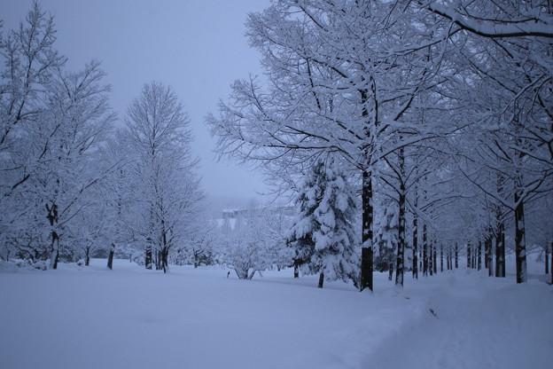 雪の公園とメタセコイアの並木道