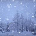 Photos: 雪が降る  画像加工