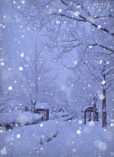 雪が降る  画像加工