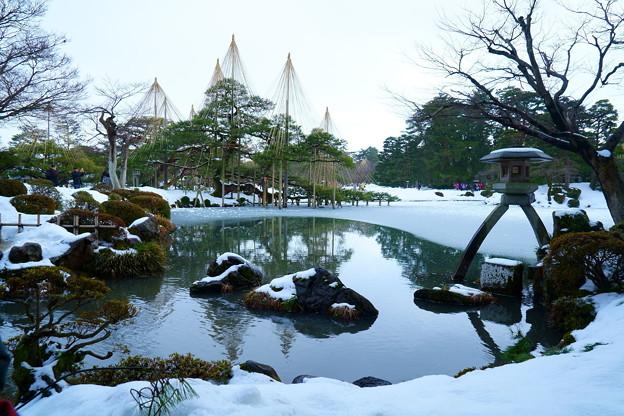 雪の兼六園 徽軫灯籠と唐崎松