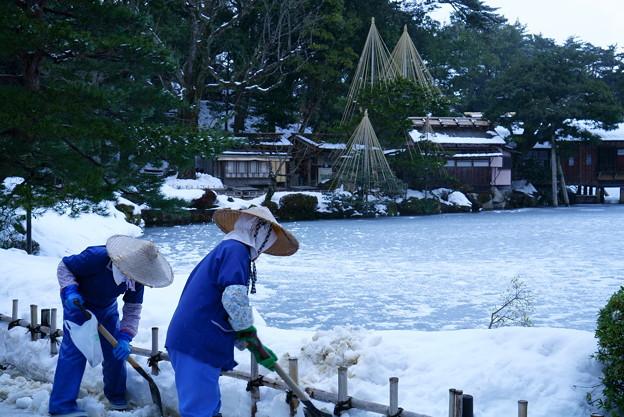 兼六園  除雪