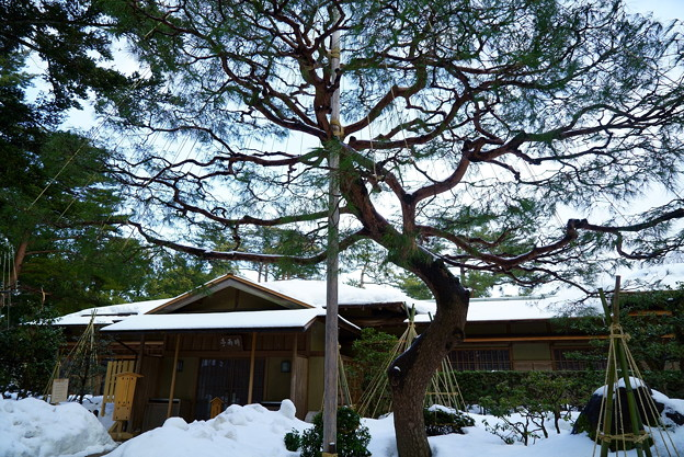 雪の兼六園 時雨亭