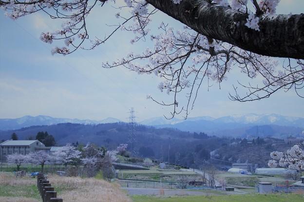 山並みと桜