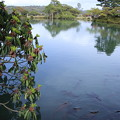 Photos: 霞ヶ池 鯉