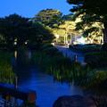 写真: 曲水 開花前のカキツバタ