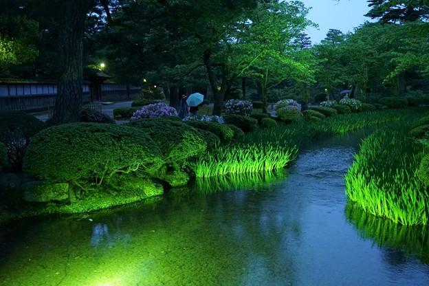 新緑の兼六園 曲水に開花前のカキツバタ