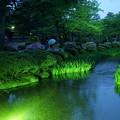 写真: 新緑の兼六園 曲水に開花前のカキツバタ