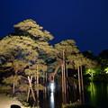 写真: 兼六園 唐崎松と霞ヶ池