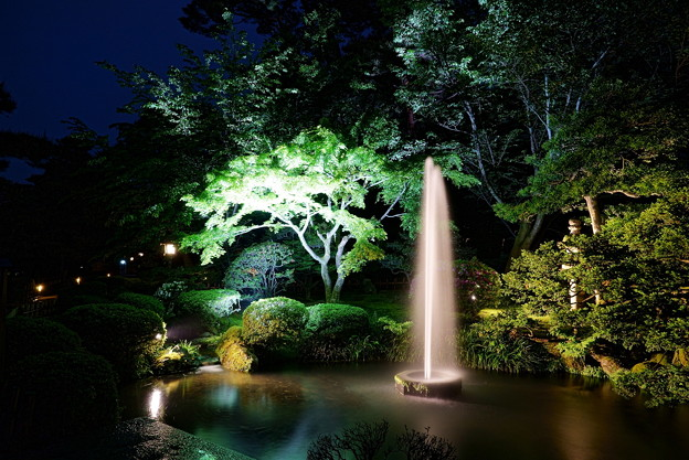 新緑の兼六園 ライトアップ 噴水