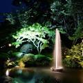 写真: 新緑の兼六園 ライトアップ 噴水