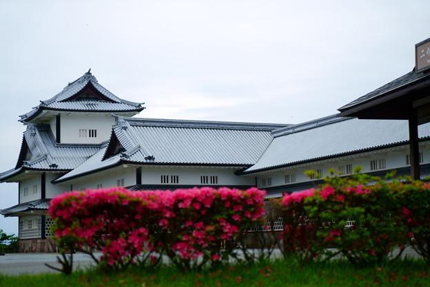 金沢城 二の丸 ツツジ