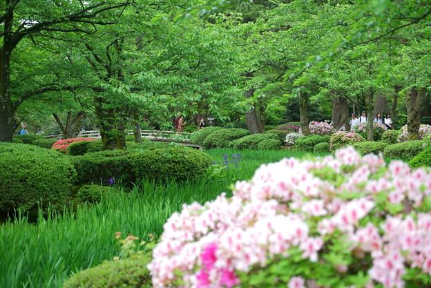 緑の中 ツツジとカキツバタと桜の新緑 花見橋