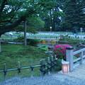 写真: 旭桜