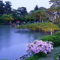 写真: 夕暮れの兼六園 霞ヶ池 唐崎松とツツジ