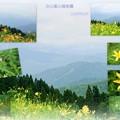 写真: 白山高山植物園 ニッコウキスゲ