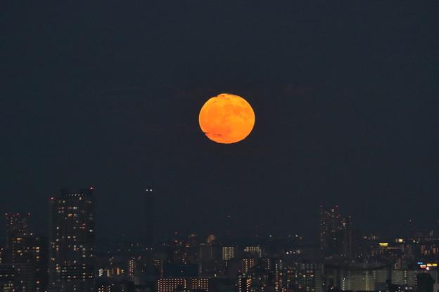 東京都 文京区役所から 満月