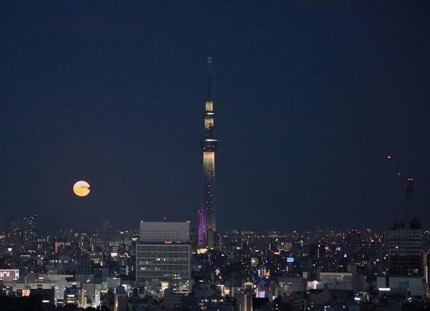 写真: 東京都 文京区役所から 東京スカイツリーと満月 月の出(1)