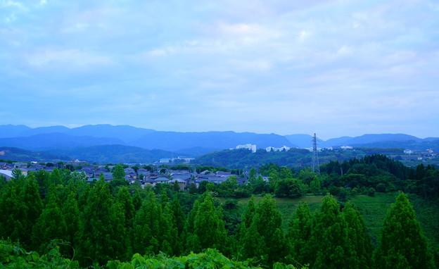 夕暮れのメタセコイアの並木道と山並み(1)