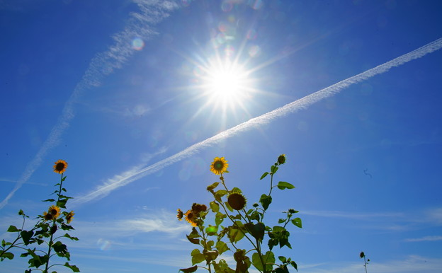 ひまわりと太陽 飛行機雲