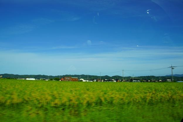 青空と収穫間近の稲