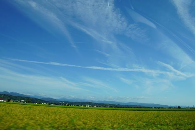 写真: 飛行機雲と収穫間近の稲