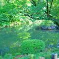 写真: 兼六園 瓢池(2)