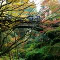鶴仙渓(山中温泉) こおろぎ橋